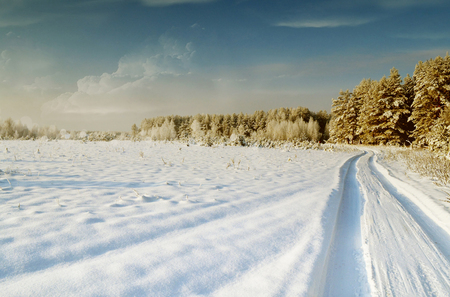 Photos of the winter woods. Winter landscape. photo