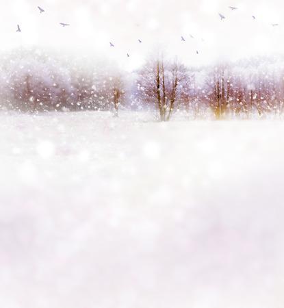 Winter landscape. Winter Forest. Photo.