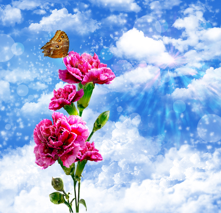 flowers and butterflies on a blue sky. photo