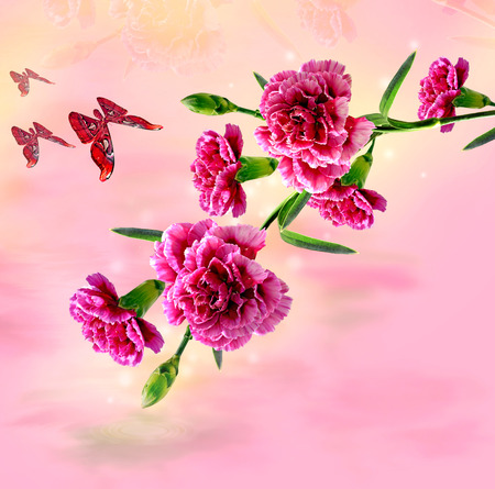 Carnation flowers and butterfly photo