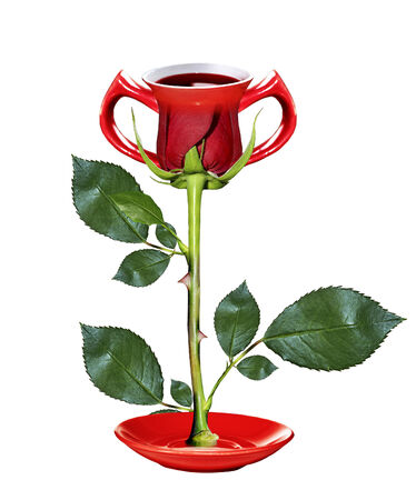 Cup of rose flower photo