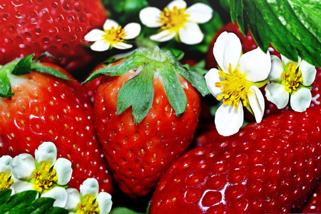 Strawberries and flowers photo