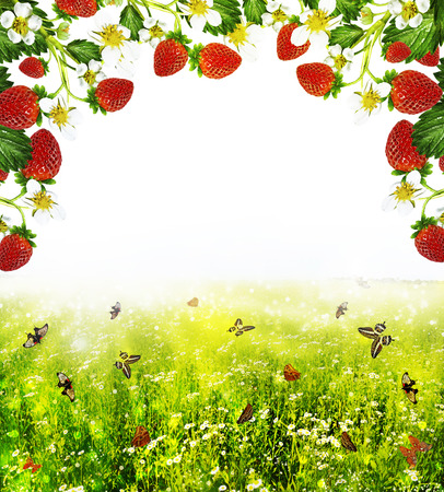Frame of the summer landscape and strawberries photo