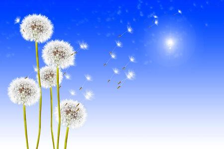 dandelion seeds on a blue sky photo