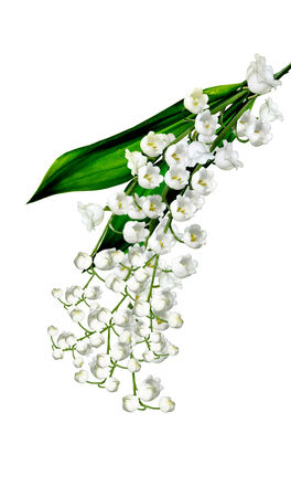 The branch of lilies of the valley flowers isolated on white background photo