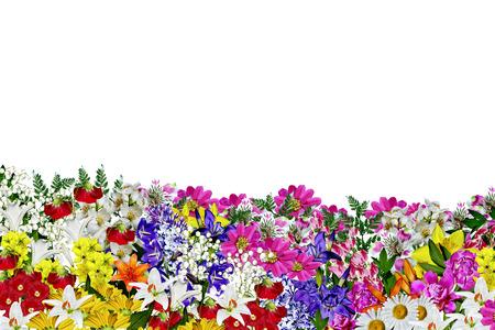 flowers isolated on white background photo
