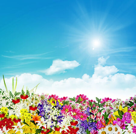 flowers on a background of blue sky with clouds photo