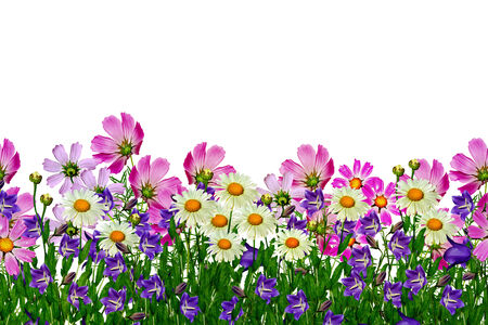 field daisy flowers and bells isolated on white background