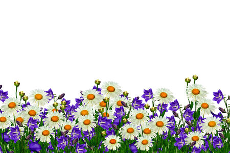field daisy flowers and bells isolated on white background photo