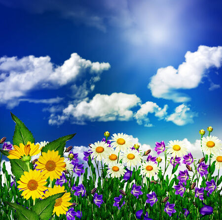 daisy flowers and bells on a background of blue sky with clouds photo