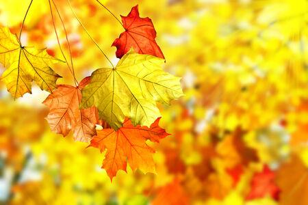 Autumn foliage. Golden Autumn. Photo. photo