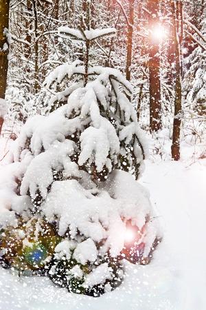 winter Landscape 版權商用圖片