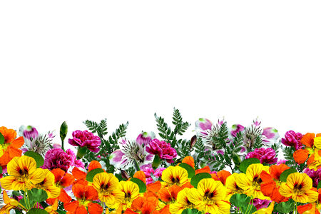flowers isolated on white background photo