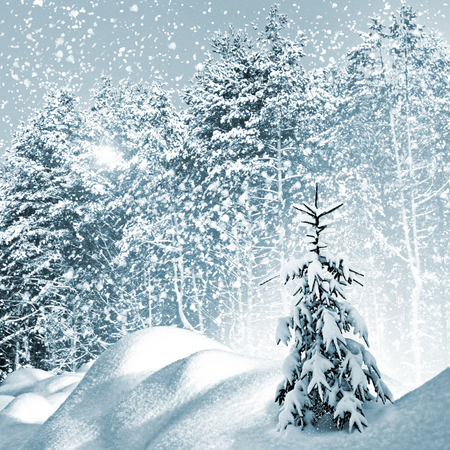 Winter. Snowfall. photo