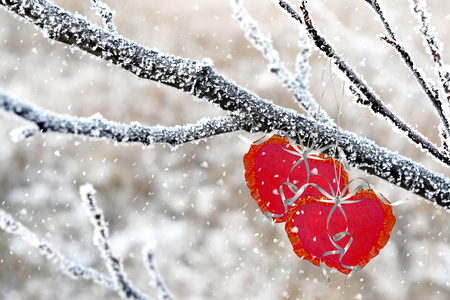 Winter Forest. heart photo