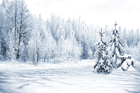 Winter Forest. Winter landscape.