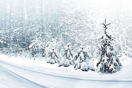 Winter Woud. Winterlandschap.
