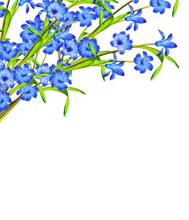 hyacinth flower isolated on white background Archivio Fotografico
