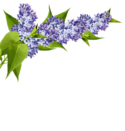 Branch of lilac flowers isolated on white background photo