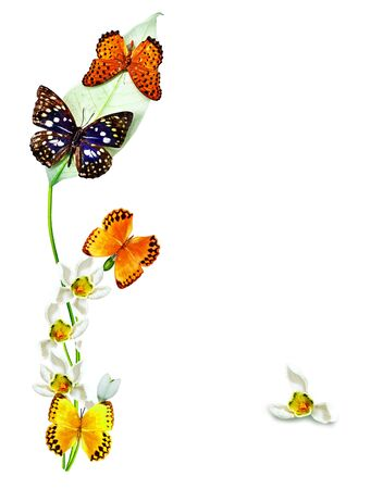 branch of flowers and butterflies isolated on a white background photo