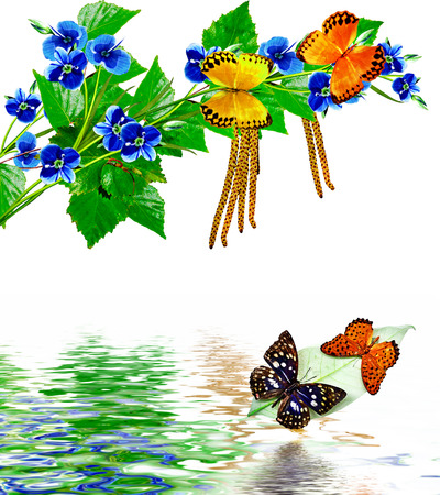 Summer landscape. Forget-me-flowers and young leaves.insects; butterflies photo