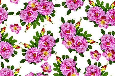 briar: Floral background. briar Stock Photo