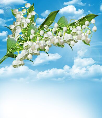 The branch of white flowers lily of the valley on a background of blue sky with clouds photo