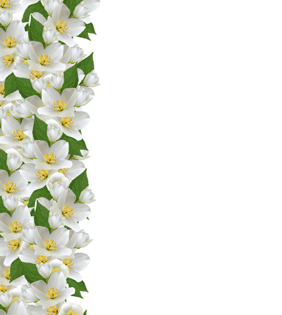 flower bouquet: branch of jasmine flowers isolated on white background