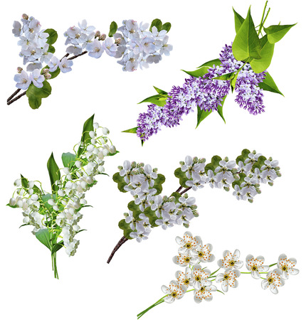 branches of lilac; apple, cherry, lilies of the valley isolated on white background photo