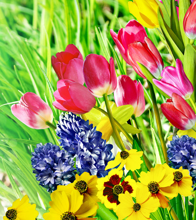 Spring flowers daffodils and tulips photo