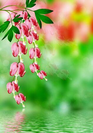 hemorragias: sangrado flor rosada del coraz�n