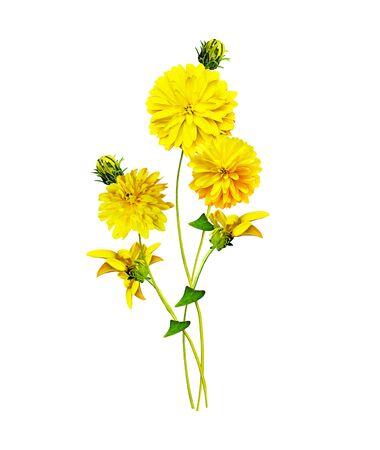 Dahlia flower isolated on white background Фото со стока