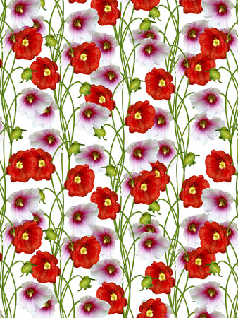 mallow: floral background. mallow flowers Stock Photo