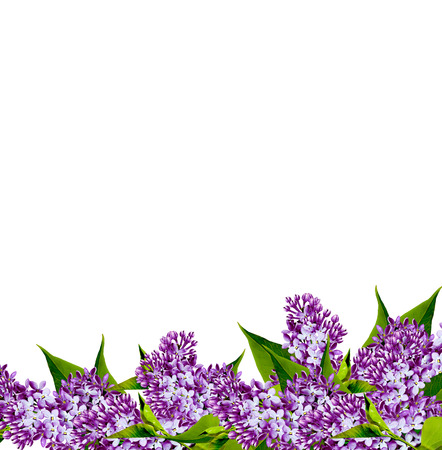 Frame of lilac flowers photo