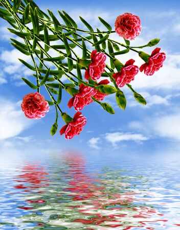 carnation flowers and blue sky with clouds photo