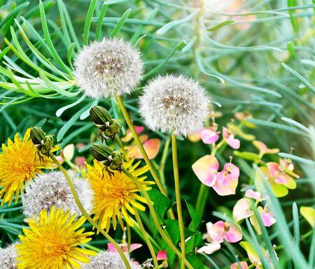 夏季景观。花卉。