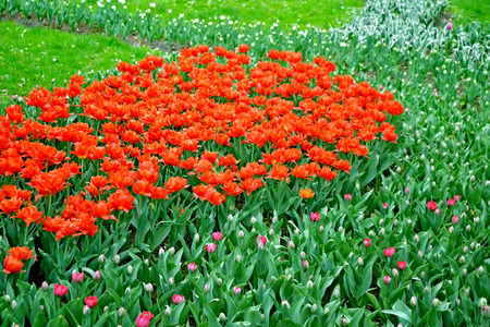 vernal: A flower bed with flowers tulips