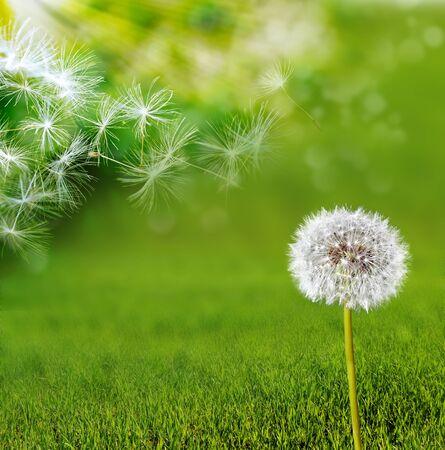 Paysage d'été. Fleurs