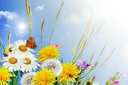 Summer landscape. wildflowers photo