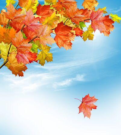 Autumn foliage. Golden Autumn. photo