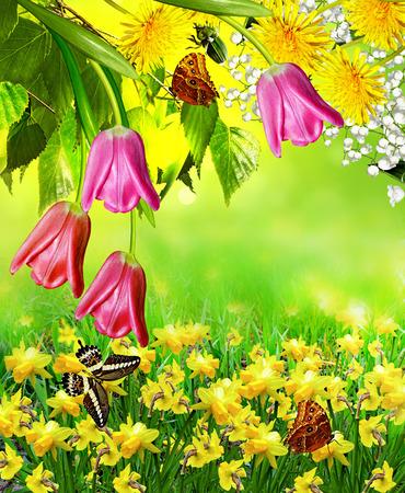 Summer landscape. flowers photo
