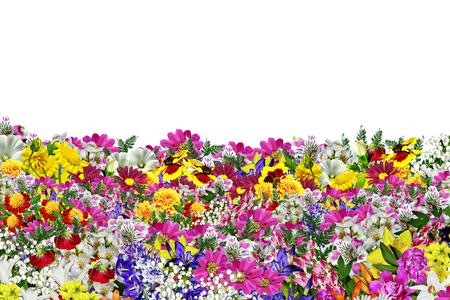 flowers isolated on white background Standard-Bild
