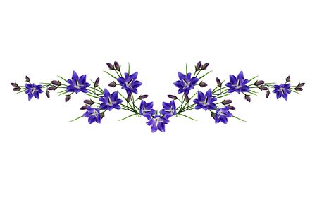 cadre: blue flowers campanula isolated on white background
