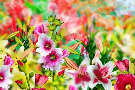 Summer landscape. Lily flowers