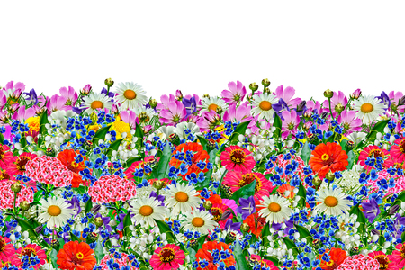flowers field: floral background