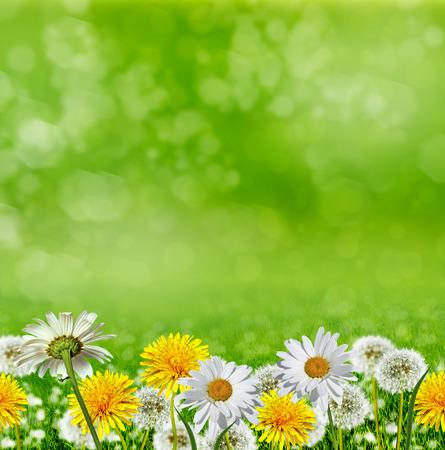 Summer landscape. Flowers