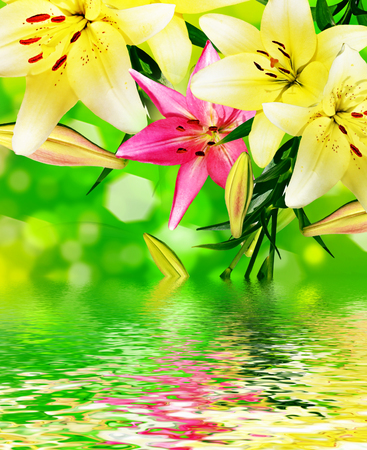 considerable: Summer landscape. Lily flowers