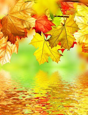 yeşillik: autumn foliage