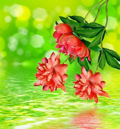 ramo de flores: Floral antecedentes.