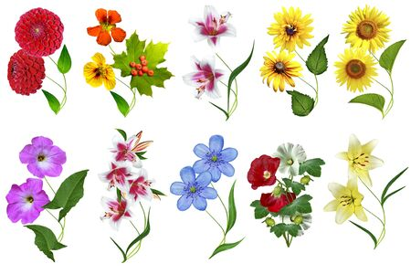 flowers isolated on white background Stock fotó